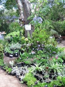 Retail display at Good Hope Gardens Nursery