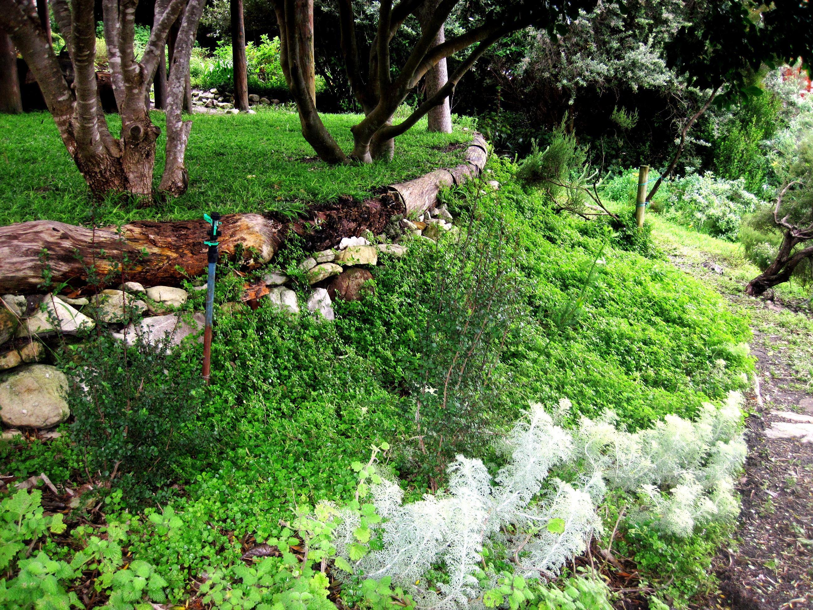 Prizes for good hope gardens nursery s indigenous spring for Good landscape