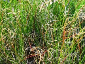 Crazy beautiful grasses