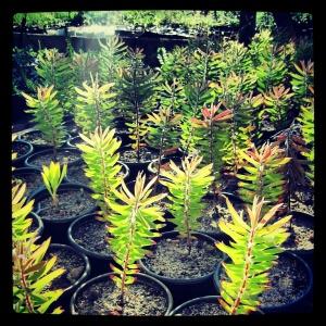 Good Hope Gardens Nursery
