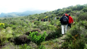 Guided Fynbos Walk at Good Hope Gardens Nursery