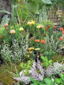 Spring fynbos display
