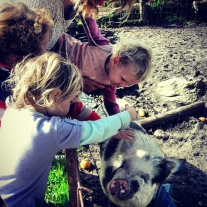 Bella the pig