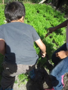 Kids Foraging course