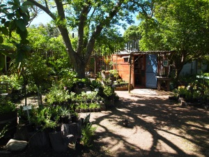 Good Hope Gardens Nursery