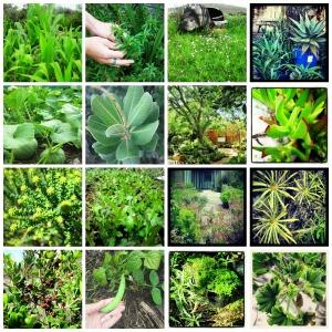 Green photos