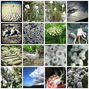 White photos