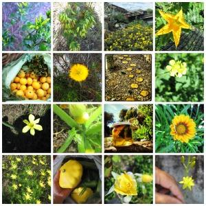 Yellow photos