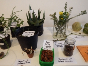 Indigenous edible plants