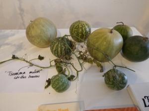 Tsama melons