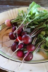Rainbow radishes