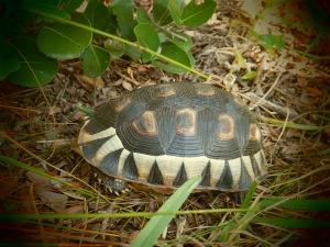 Angulare tortoise