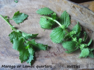 Wild greens - marogo and nettle