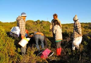Strandveld foraging