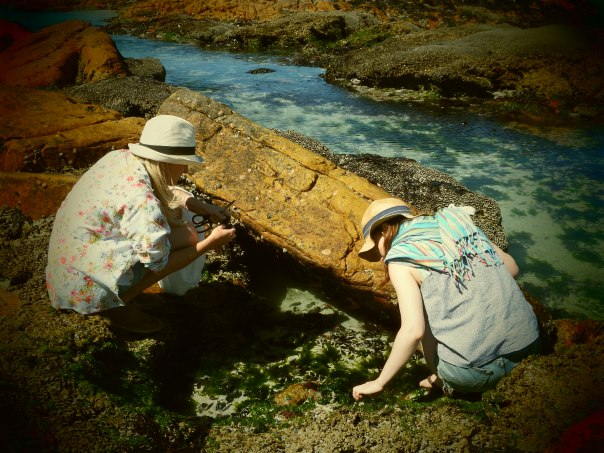 Coastal Foraging in Cape Town