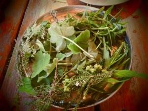 Indigenous herbs