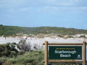 Coastal foraging at Scarborough beach