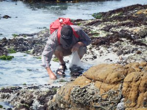 Collecting mussels