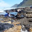 Coastal foraging in the Cape