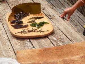 Edible seaweeds - coastal foraging course