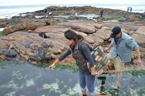 Coastal Foraging South Africa