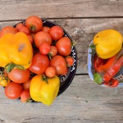 Organic Veg - Forage Harvest Feast