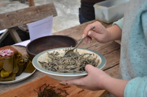 Coastal Foraging with seaweeds