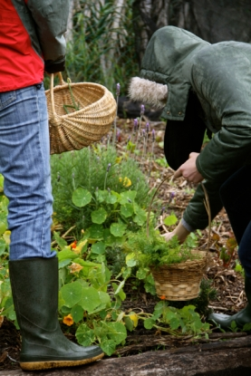 Fynbos Foraging Courses