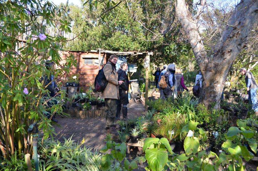 Fynbos Foraging at Good Hope Gardens Nursery