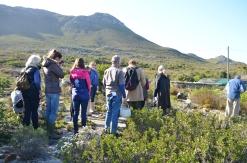 Fynbos foraging Cape Point