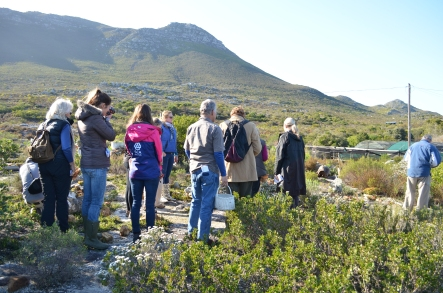 Fynbos foraging Cape Point