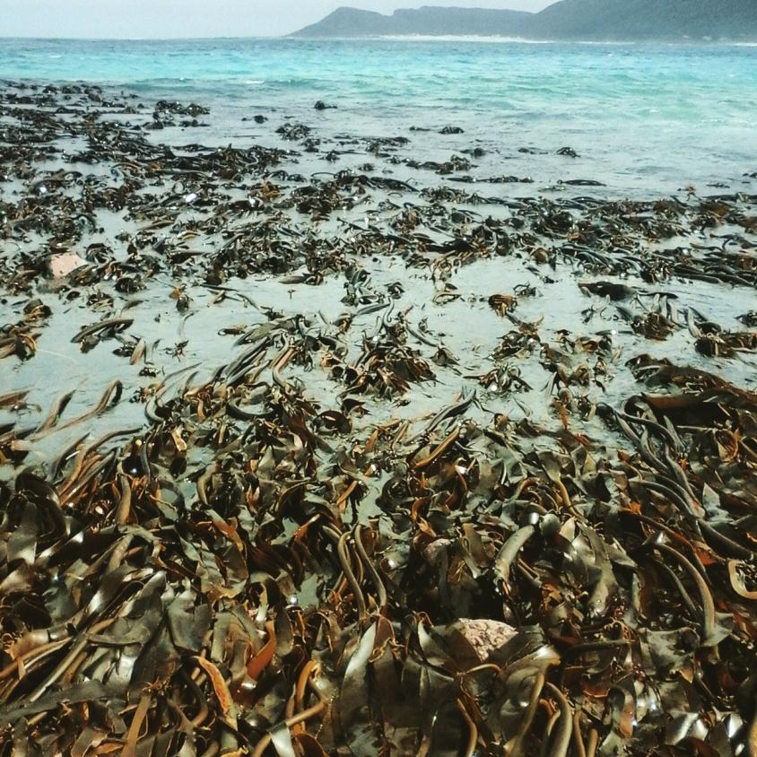 Kelp beds