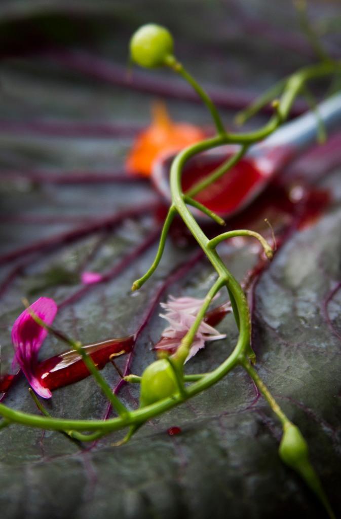 Wild berry couli and radish seeds