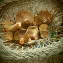 Veld and Sea mushroom foraging