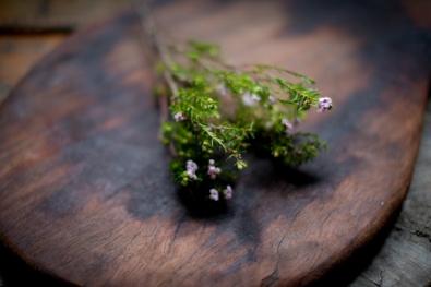 Wild Herbs Cape Town